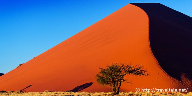 ナミブ砂漠の画像 p1_20